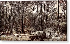 Dry Autumn Landscape Of A Vintage Woodland Acrylic Print by Jorgo Photography - Wall Art Gallery