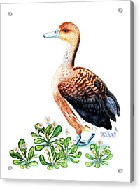 Duck And Daisies Acrylic Print by Sandra Moore