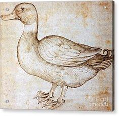 Duck Acrylic Print by Leonardo Da Vinci