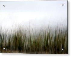 Dune Grass Acrylic Print by Doug Hockman Photography