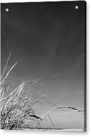 Dune Grass With Sky Acrylic Print by Michelle Calkins