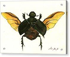 Dung Beetle Acrylic Print by Juan Bosco