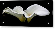 Duo Acrylic Print by Cathie Tyler