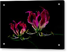 Duo Lily Acrylic Print by David Paul Murray