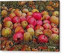 Durnitzhofer Apples Acrylic Print by Ditz