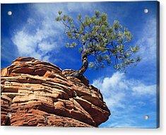 Dwarf Pine And Sandstone Zion Utah Acrylic Print by Utah Images