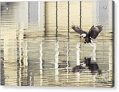 Eagle Abstract Acrylic Print by Idaho Scenic Images Linda Lantzy