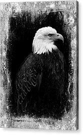 Eagle Acrylic Print by Martina Fagan