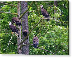 Eagle Tree Acrylic Print by Mike  Dawson