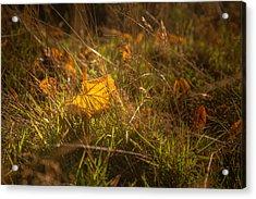 Early Autumn Leaf Fall Acrylic Print by Chris Fletcher