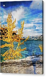 Early Fall Acrylic Print by Marty Koch