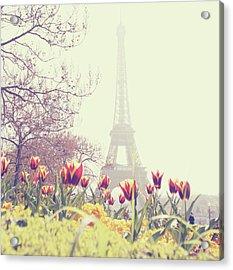 Eiffel Tower With Tulips Acrylic Print by Gabriela D Costa