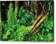 El Yunque National Forest Ferns Impatiens Bamboo Mirror Image Acrylic Print by Thomas R Fletcher