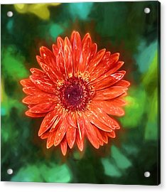 Electric Orange Daisy Acrylic Print by John Haldane