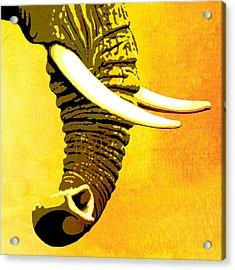Elephant Animal Decorative Yellow Wall Poster 7 Acrylic Print by Diana Van