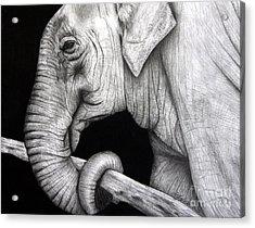 Elephant Acrylic Print by Erika Farkas