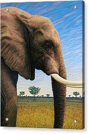 Elephant On Safari Acrylic Print by James W Johnson