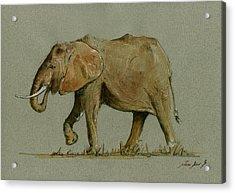 Elephant Watercolor Acrylic Print by Juan  Bosco