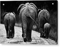 Elephants In Black And White Acrylic Print by Johan Elzenga
