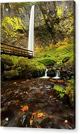 Elowah Perspective Acrylic Print by Mike  Dawson
