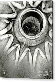 Em15 Acrylic Print by Mark Stankiewicz