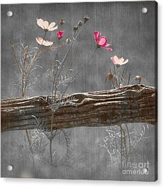 Emerging Beauties - V38at1 Acrylic Print by Variance Collections