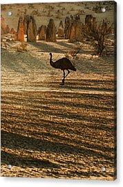 Emu Terrain Acrylic Print by Heather Thorning