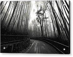 Enchanted Forest Acrylic Print by Daniel Hagerman