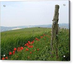England Sussex Poppy Field Acrylic Print by Yvonne Ayoub