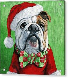 Holiday Cheer -english Bulldog Santa Dog Painting Acrylic Print by Linda Apple