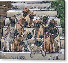 English Mastiff Puppies Acrylic Print by Nadi Spencer