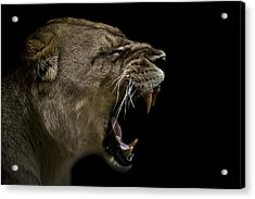 Enraged Acrylic Print by Paul Neville