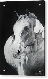 Equestrian Beauty Acrylic Print by Carrie Jackson