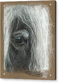Equine Eye Detail Acrylic Print by Terry Kirkland Cook