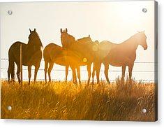 Equine Glow Acrylic Print by Todd Klassy