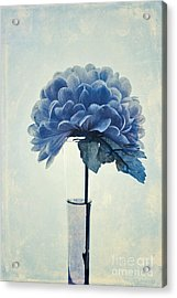 Estillo - 05b2vt03 Acrylic Print by Variance Collections