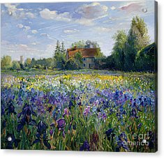 Evening At The Iris Field Acrylic Print by Timothy Easton