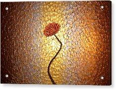 Evening Poppy Acrylic Print by Daniel Lafferty
