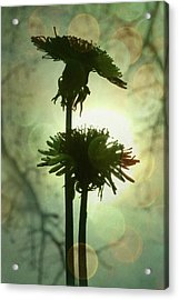 Ever After Acrylic Print by Amy Tyler