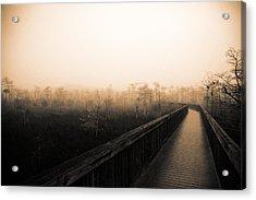 Everglades Boardwalk Acrylic Print by Gary Dean Mercer Clark