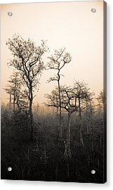 Everglades Cypress Stand Acrylic Print by Gary Dean Mercer Clark