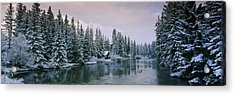 Evergreen Trees Covered With Snow Acrylic Print by Panoramic Images