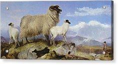 Ewe And Lambs Acrylic Print by Richard Ansdell