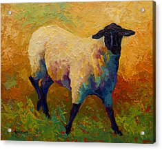 Ewe Portrait Iv Acrylic Print by Marion Rose