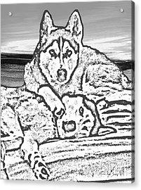 Expressive Huskies Mixed Media G51816_e Acrylic Print by Mas Art Studio