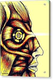 Facial Muscles Acrylic Print by Paulo Zerbato