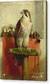 Falcon Acrylic Print by Sir Edwin Landseer