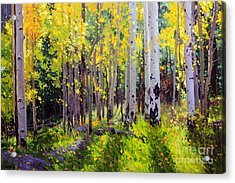 Fall Aspen Forest Acrylic Print by Gary Kim