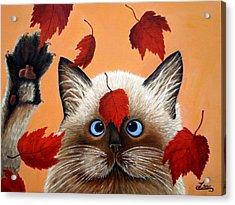 Fall Cat Acrylic Print by Chris Law