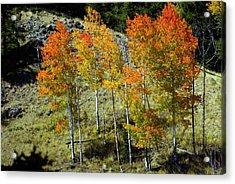 Fall In Colorado Acrylic Print by Marty Koch
